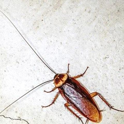cockroach_pest05