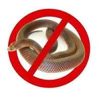 snake_pest1