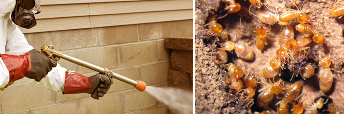 Termite Control2